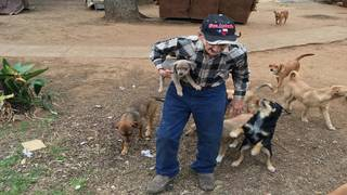 Veterinary volunteers, more fosters needed for 27 abandoned dogs