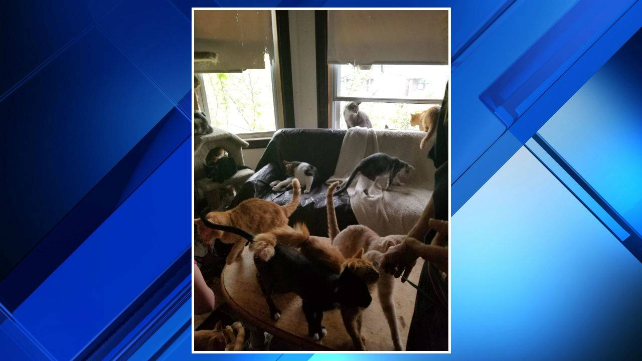 Cats rescued from Southwest Detroit home 5