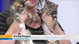 4's Pet Project: Kittens up for adoption!
