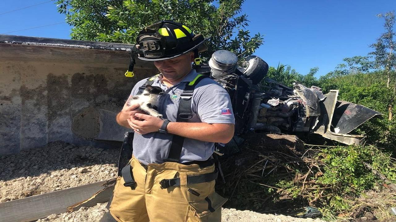 Kitten rescued from overturned dump truck
