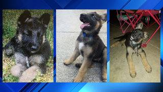 'Bring her home:' Pet owner's plea to thief who stole her 12-week-old…