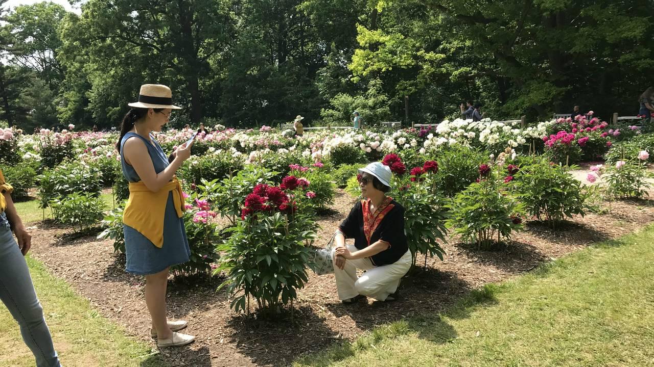 Ann Arbor peonies visit