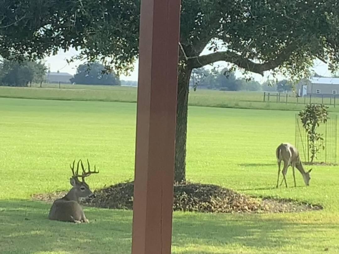 It's a beautiful morning!  Backyard beauty!