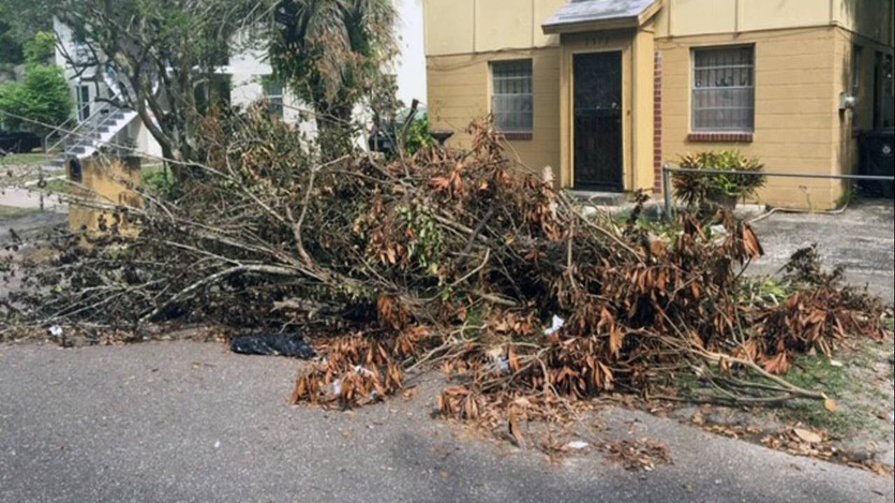 tree-debris-1_1555268335362.jpg