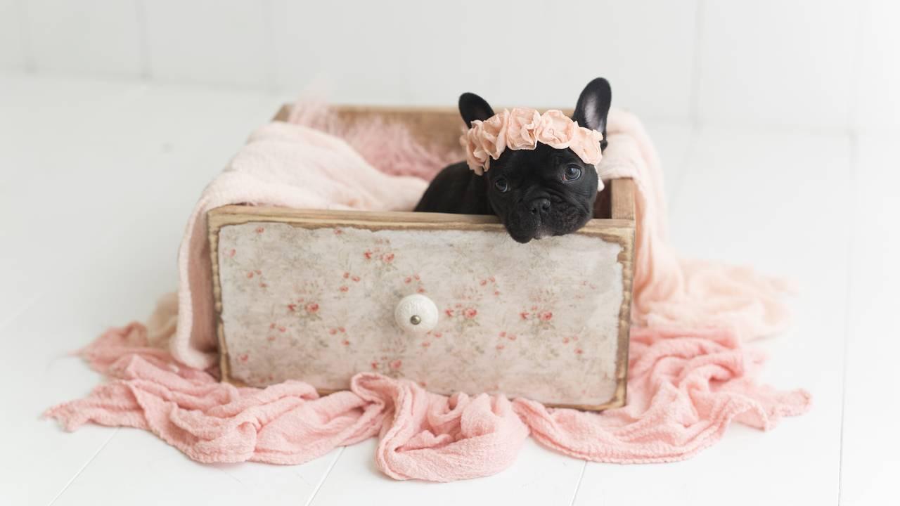 Olive Puppy Newborn-Olive Puppy Newborn-0018.jpg