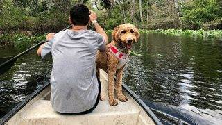 Pups prohibited: Dogs no longer allowed at Wekiva Island