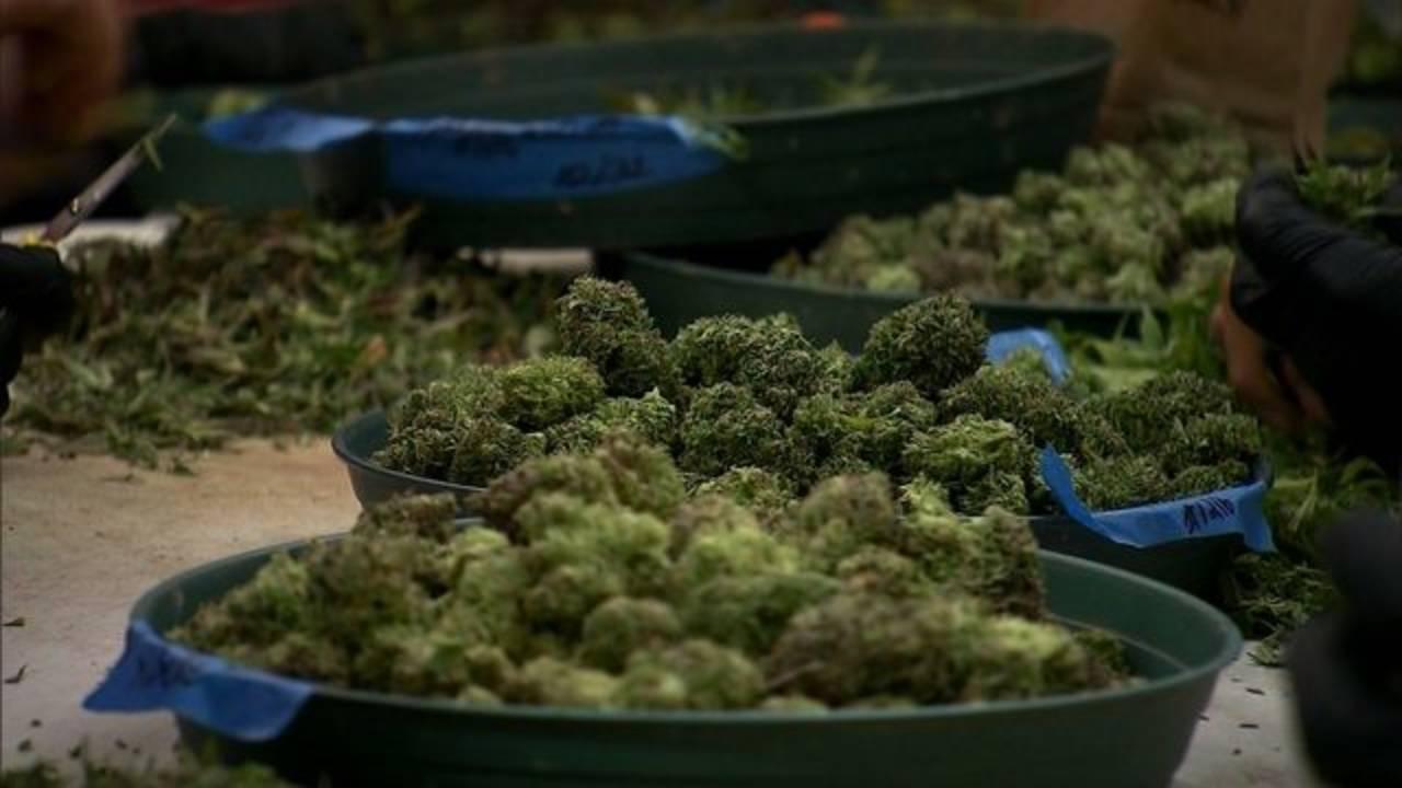 Marijuana, weed, pot67866570-75042528