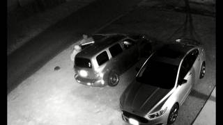 Video shows thieves stealing items from car in driveway