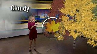 VIDEO: Why do leaves change color, and why doesn't SA get cool colors?