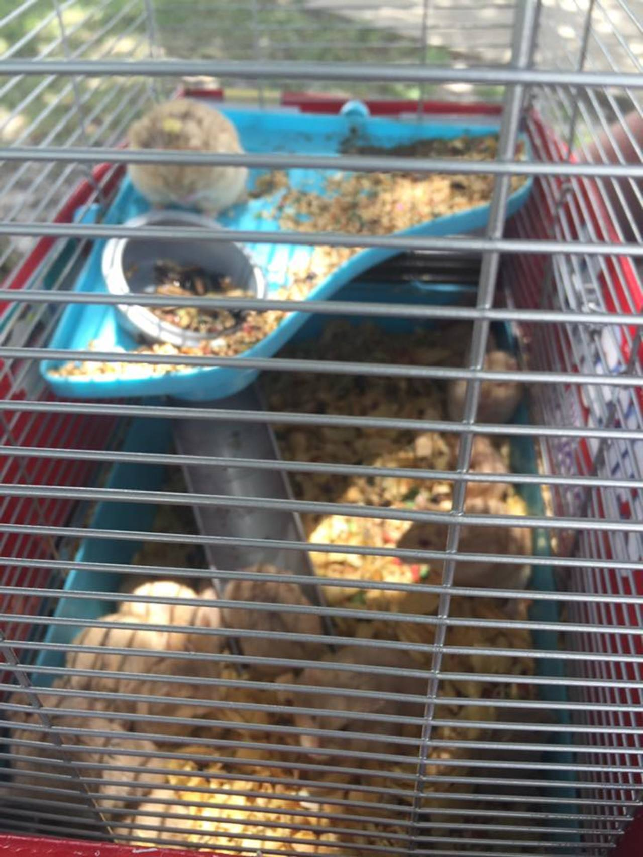 Hamsters1_1468431364699.jpg