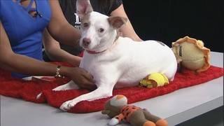 Adopt a pet: Meet Bella
