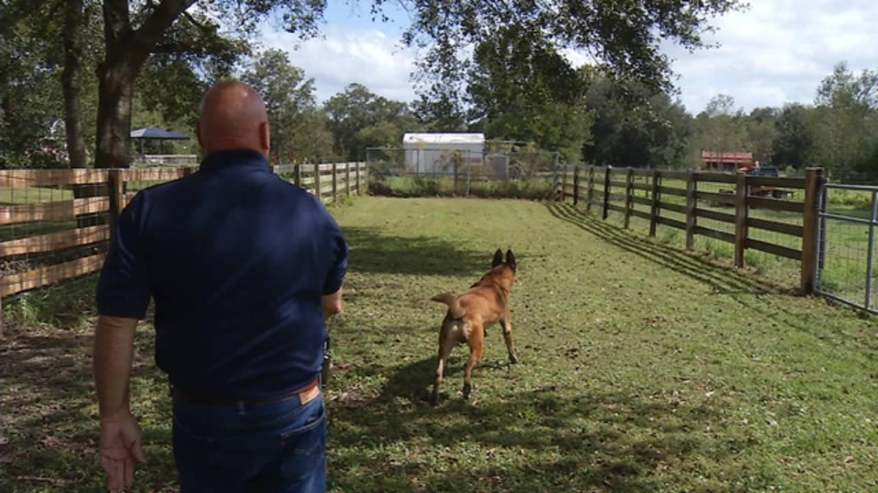 Wilkie with Gator Fetch_1509392411122.jpg