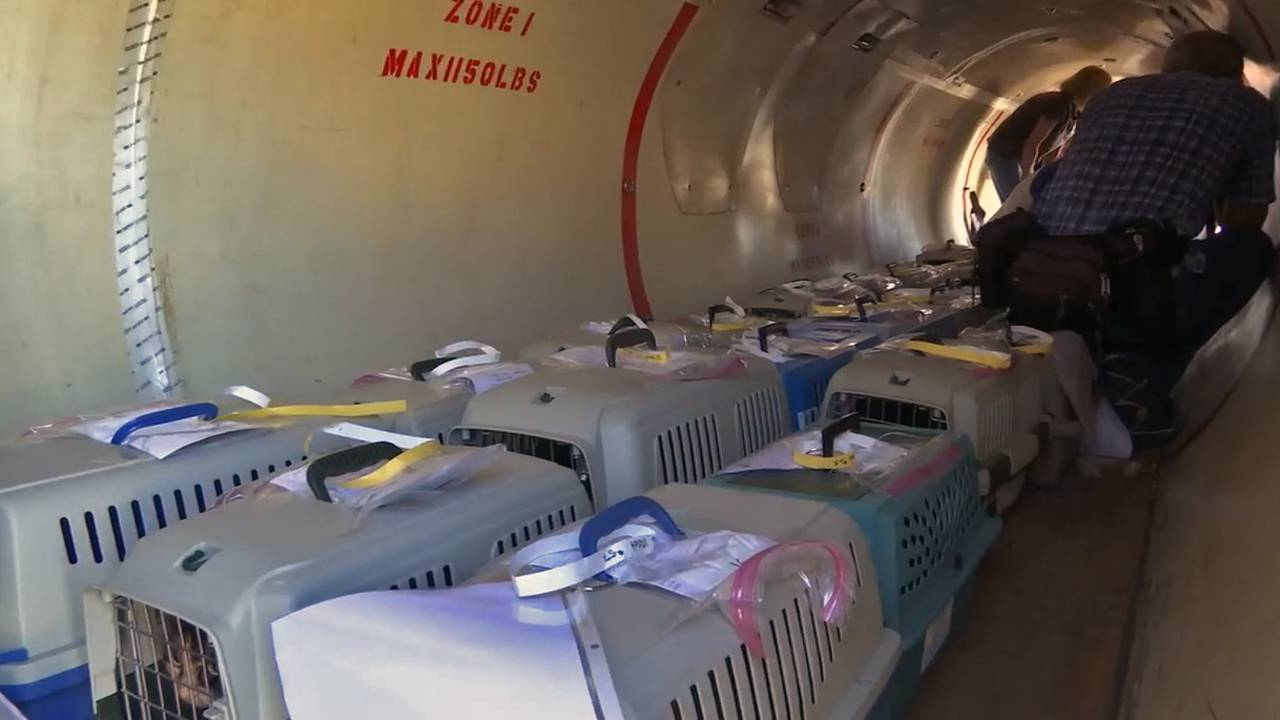 Cats on plane