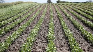 How soybeans --yes, soybeans -- could affect midterm elections