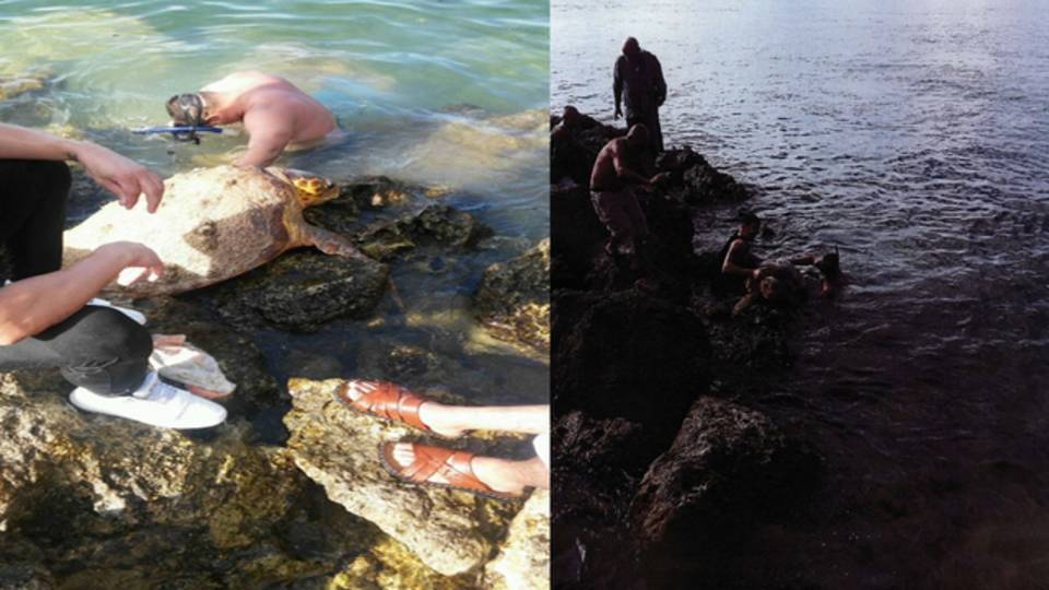 Sea turtle on coral rock