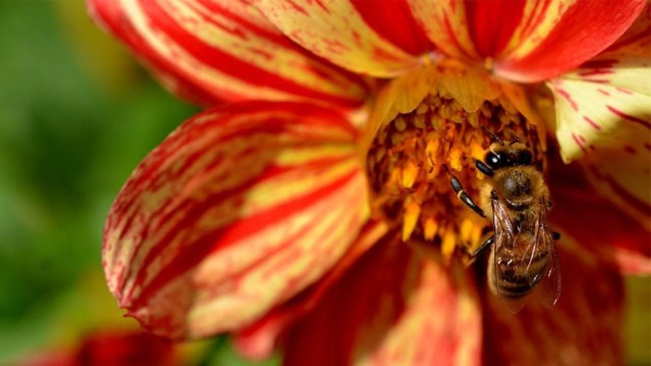 Flower 1_.jpg