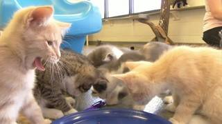 Franklin County Humane Society hosts Clear the Shelter event Friday