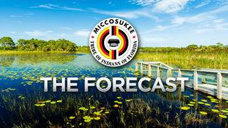 Local 10 Forecast Aug 16th AM