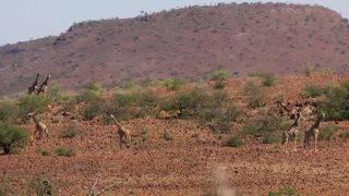 Himba Kudu