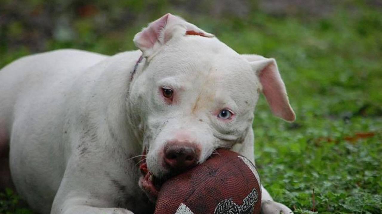 olaf-dog-adoption-2_1566914053798.jpg