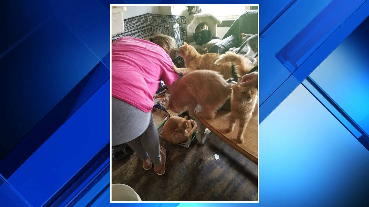 Cats rescued from Southwest Detroit home 4