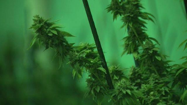 Detroit million-dollar marijuana bust 9