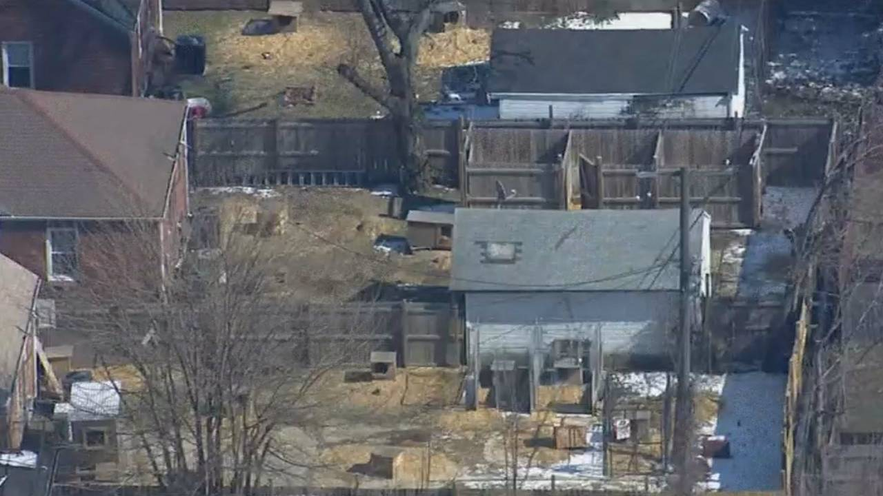 Detroit dog fighting ring busted backyard