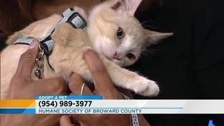 Adopt a Pet: Meet Erick