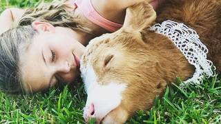 Meet Harveigh: Adorable calf rescued during Hurricane Harvey forges&hellip&#x3b;