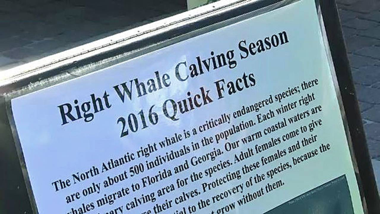 Right Whale Festival quick facts