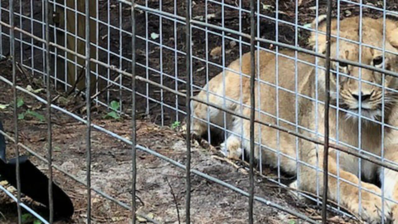 zoo 5_1532727921025.jpg.jpg