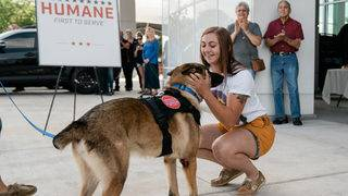 Military working dog reunites with handler after year apart