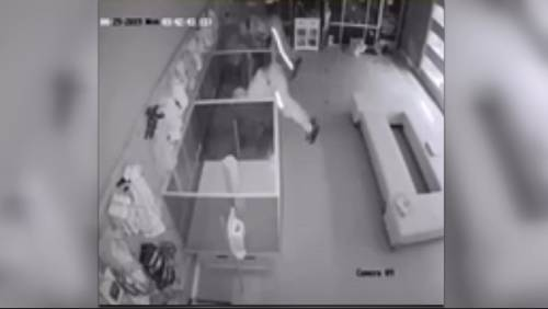 Heist caught on camera: Thieves make off with $44,000 worth of puppies