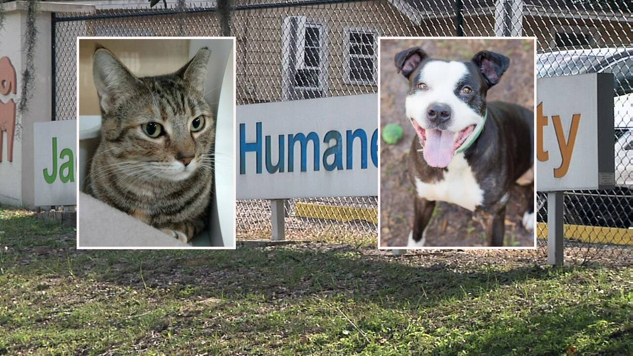 Help Jacksonville Humane Society have silent night for holidays