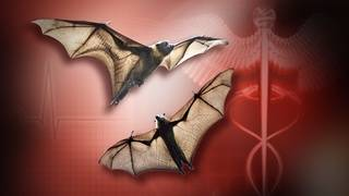 Person exposed to rabid bat in Duval County