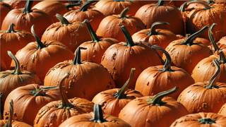 Most Instagram-worthy pumpkin patches in Central Florida