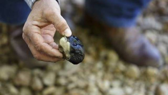 Colorado County Groundwater Conservation District Board Member Andrew Labay, who is also a fisheries biologist, holds a rock covered in a black contaminant on Skull Creek near Inland Environmental & Remediation, Inc., south of Columbus, Texas on April 14, 2019.