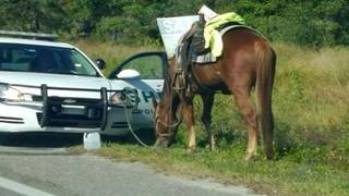 Judge: Woman arrested for DUI while riding horse unfit to care for it