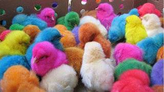 Think twice before buying an Easter animal