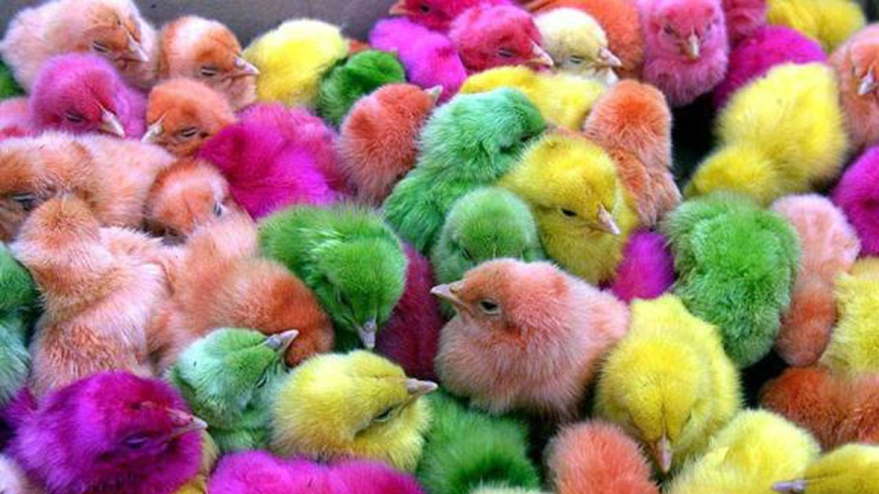 easter chicks colored_041017.jpg