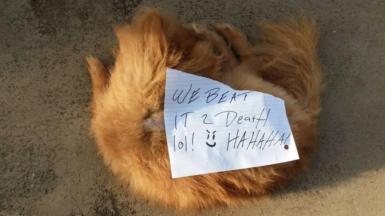 Graphic--dog-beaten-to-death.jpg_34647248