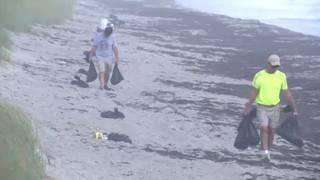 Volunteers, inmates clean up dead fish on Brevard beaches