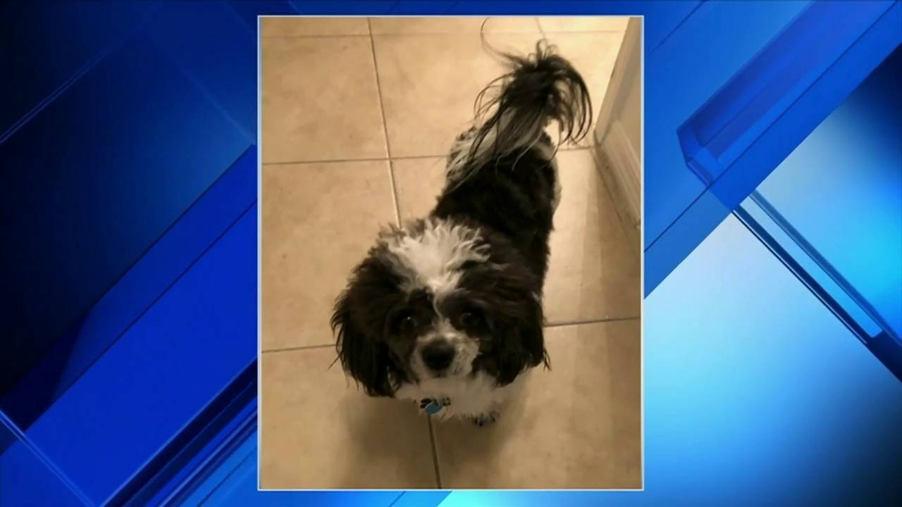 Pit bulls attack small dog near Fort Lauderdale elementary