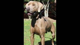 Adoptable dogs for Nov. 16-23