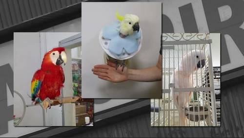 5 stolen birds: Similarities noticed in 2 Houston-area burglaries