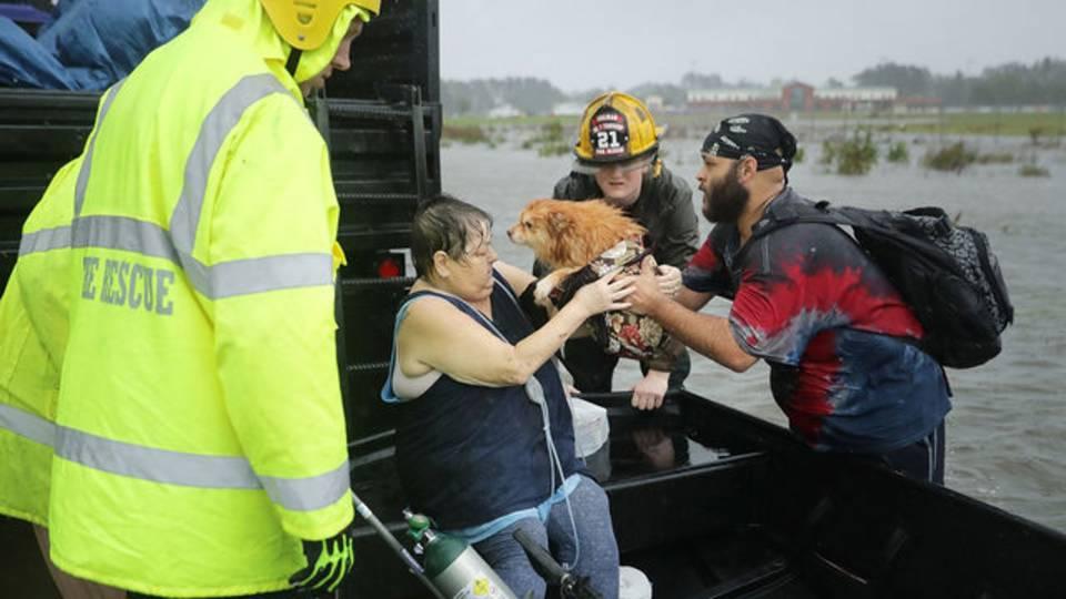 Dog-rescue-Florence_1536936184999.jpg