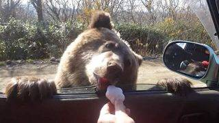 Drivers Feed Hungry Bear Cookies After It Approached Their Car