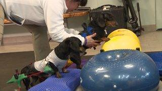 A look inside stem cell treatment for dogs
