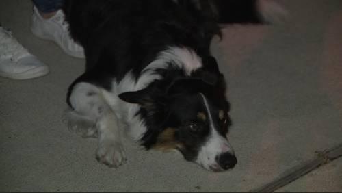Man, dog help find missing elderly man near Fulshear community