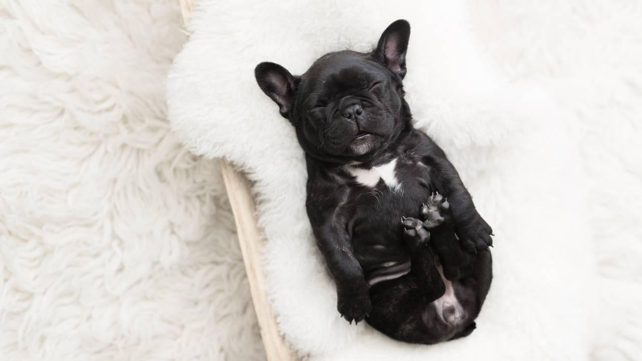 Olive Puppy Newborn-Olive Puppy Newborn-0055.jpg